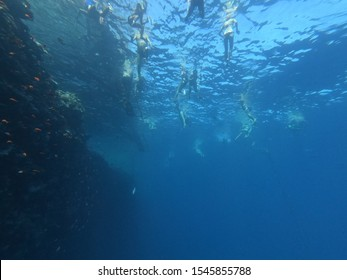 People swim in the red sea near the pantone, view under water