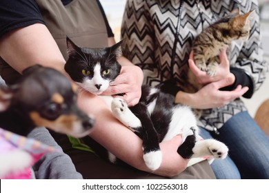 People with their pets are waiting for a medical examination at the veterinary clinic. Animal Health