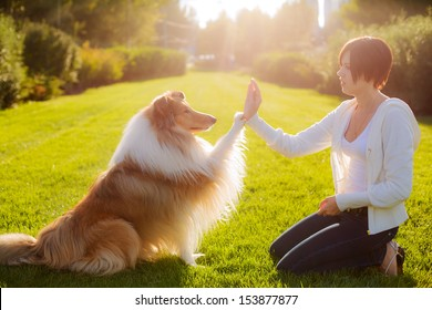 people training a dog Collie. Collie gives his paw to her mistress