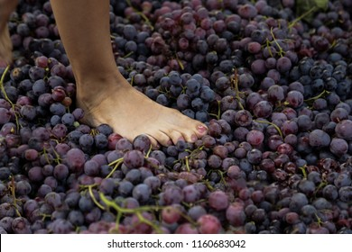 People treading grapes to make wine in a traditional way