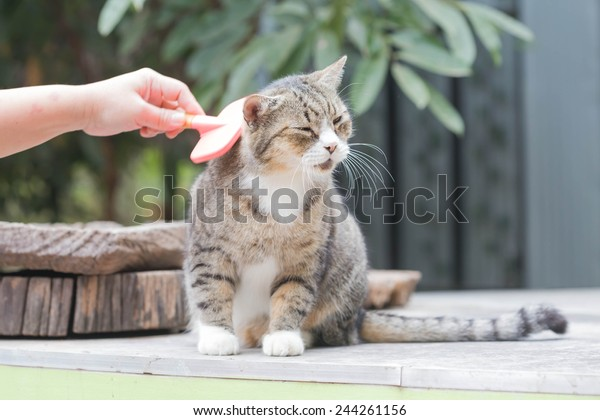 People are using a comb brush the cat is sitting.