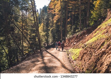 People walk along path in autumn mountainous forest with yellow trees lit by the sun