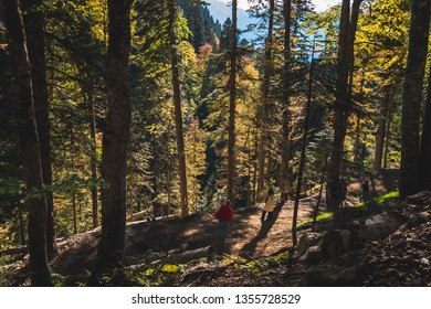 People walk in dense autumn mountainous forest with yellow trees lit by the sun
