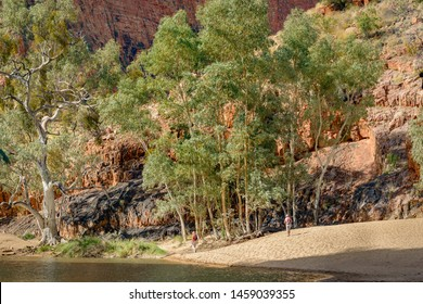 People walking among the white gum trees in the East MacDonnell Range in the desert country of the Northern Territory Australia.