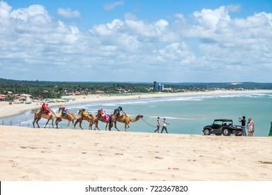 People walking camel on the beach of Genipabu