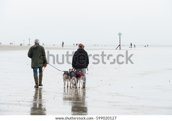 People is walking with dog on a foggy beach