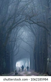 People walking dog in sandy path in foggy winter forest.