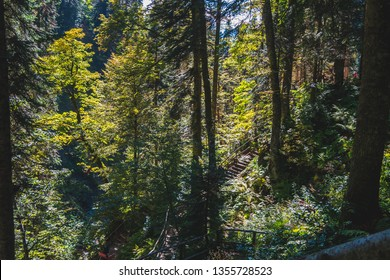 People walking up and down multiple mountain paths in mountain forest covered with green and yellow trees lit by the sun