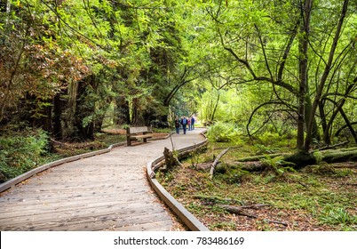 People walking at the Muir Woods Redwoods Forest - Starburst, San Francisco, SF, California, CA, USA on the 18th of August, 2017