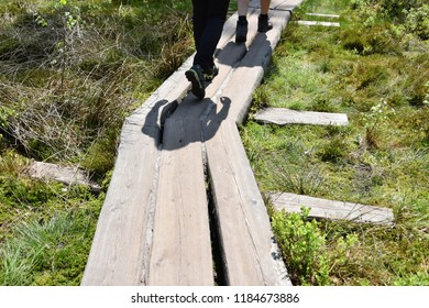 People walking on footbridge on marshy meadows. Legs and shadows on wooden gangway. Green grass and plants. Trip on summer day, hiking outdoors. Recreation time on a sunny day with friends.