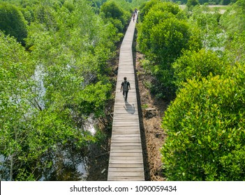 People Walking on the Mangrove bridge with view from Above of Mangrove Forest Conservation
