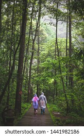 People walking in the rain forest