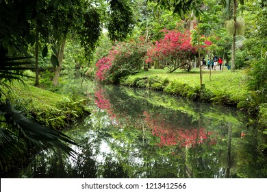 People walking tranquility in the Ibirapuera Park, Sao Paulo