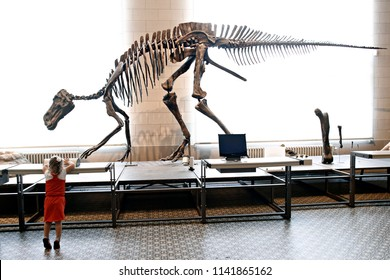 People watch a dinosaur fossil during their visit to the Museum of Natural Sciences of Belgium in Brussels on July 3, 2016