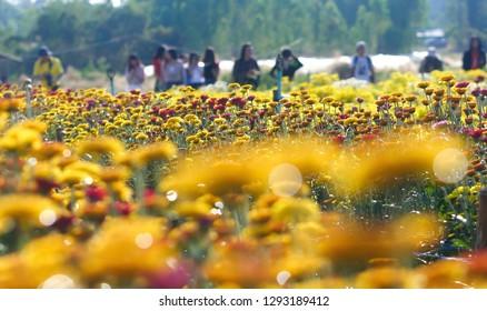 People watch the flower garden.