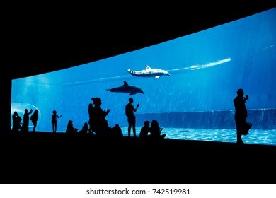 People watching dolphins in blue aquarium in darkness