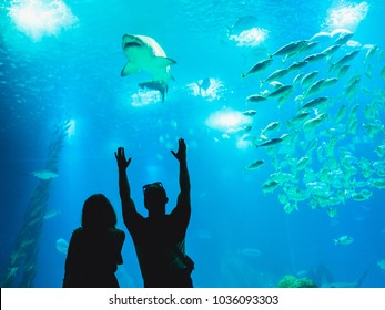 People watching fish through the glass in a Oceanarium.