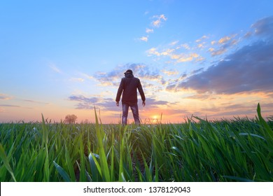 people wheat field sunset / landscape spring field agriculture of Ukraine