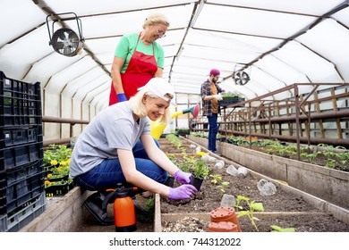 People working in a greenhouse