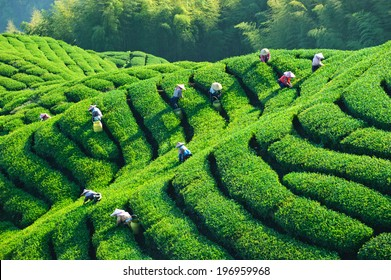 People working in the lush fields of a terraced farm.