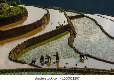 People working on terraced rice field at sunny day in Sapa, Vietnam. Sa Pa is famous for the terraced rice fields in North of Vietnam.