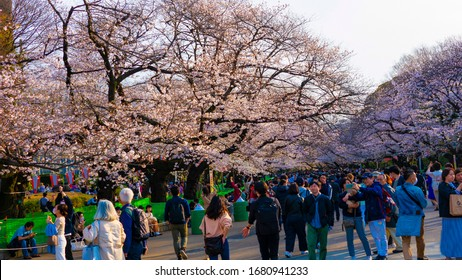 Peoples enjoy the spring cherry blossoms in Ueno Park, Tokyo, Japan shot taken : 3 - 22- 2020