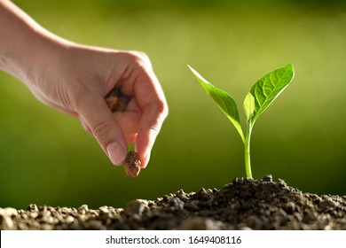 People's hand planting seeds in soil