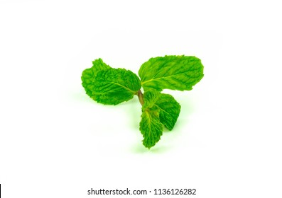 Pepermint isolated on white background