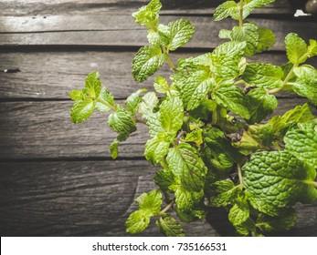 Pepermint Leaf