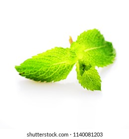 pepermint leaf isolated
