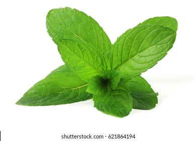 Pepermint (Mentha × piperita) leafs. In traditional herbal medicine peppermint has reportedly been used as a tonic for preventing gas, relieving spasms, and other stomach ailments.