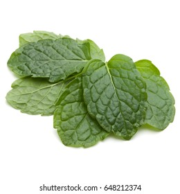 Peppermint herb isolated on white background cutout. Mint leaves.