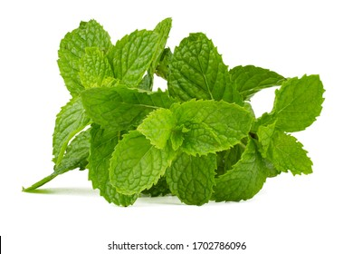 Peppermint isolated on white background,side view.