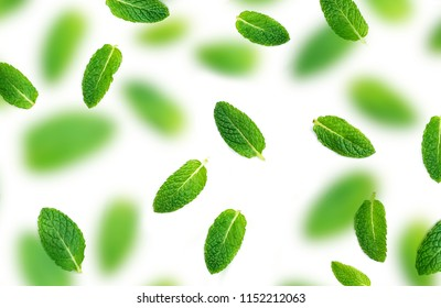 Peppermint leaf pattern.  Falling Fresh mint leaves isolated on white background, flat lay. Macro