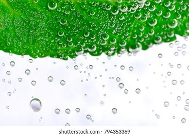 A peppermint leaf in soda water on white background.