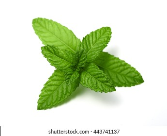 peppermint leaves isolated