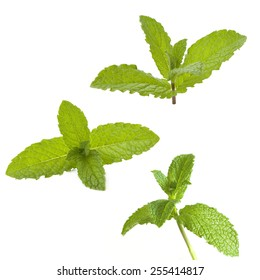 peppermint leaves on a white background