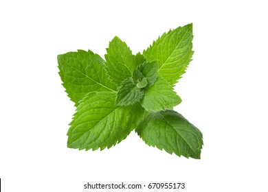 Peppermint, lemon balm isolated on a white background close-up