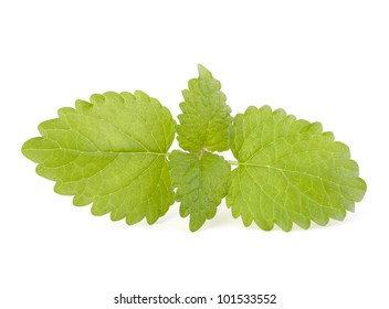 Peppermint or  mint isolated on white background