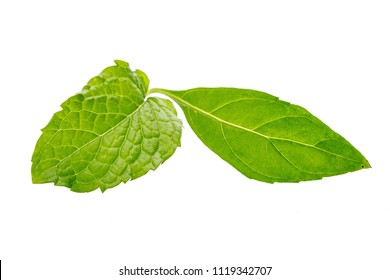 Peppermint and mint leaves isolated on white