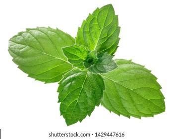 Pfefferminzblätter oder Minzblätter (Mentha piperita) einzeln auf Weiß