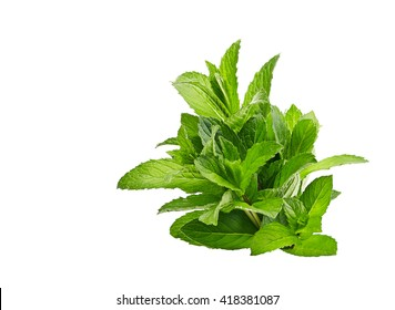 peppermint on isolated on white