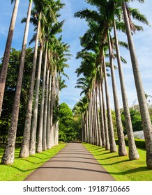 Peradeniya Royal Botanic Gardens located near Kandy city, Sri Lanka. Peradeniya Royal Botanic Gardens are the largest of the botanical gardens of Sri Lanka. - Shutterstock ID 1918710665