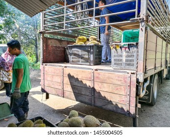 Perak, Malaysia - July 13, 2019: Workers put the black basket full of durian fruits at the back of the lorry ready to sale at the market. The fruits are pickup fresh from the durian orchard garden.