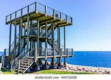 Perce, Canada - June 6, 2017: Wooden viewing platform building overlooking Gannet birds colony nesting on cliff on Bonaventure Island in Quebec, Canada by Gaspesie, Gaspe region