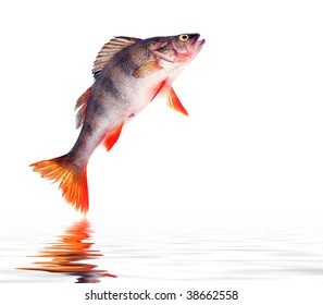 Image result for Reasons Why Fish Jumps