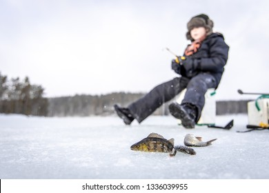 Perch on winter fishing on frozen lake