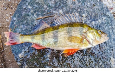 Perch on wood