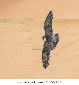 Falcon Desert Images, Stock Photos & Vectors | Shutterstock
