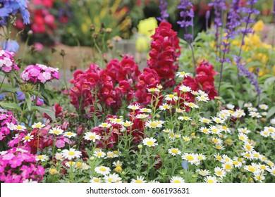 Perennial  garden flower bed in spring at flower show